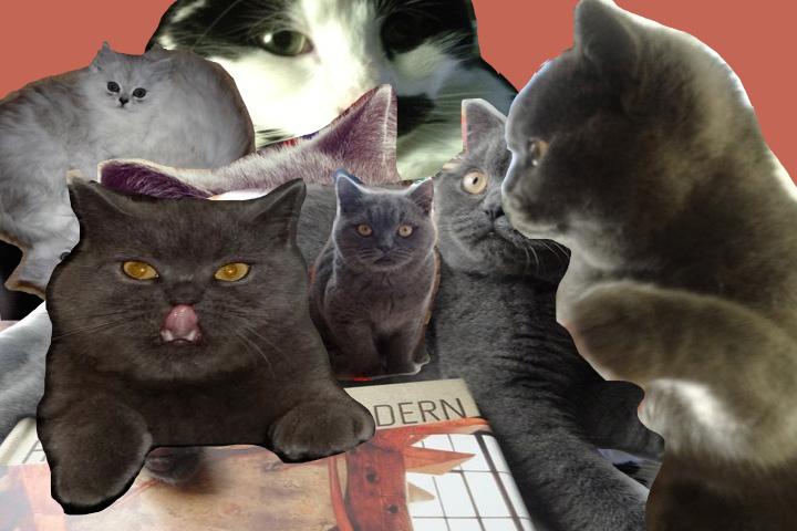 Kitten Explosion clip jpg